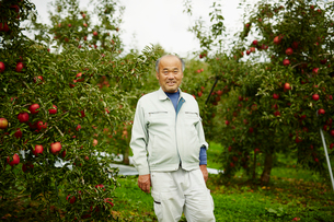 リンゴ畑の笑顔の農夫の写真素材 [FYI02057052]
