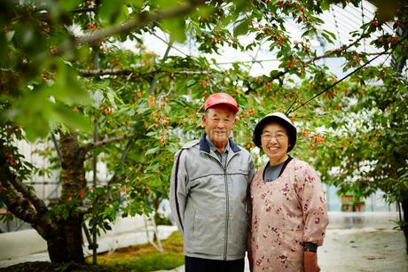 サクランボ畑に立つ笑顔の農家夫婦の写真素材 [FYI02057176]