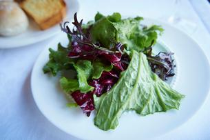 グリーンサラダの写真素材 [FYI02057192]