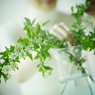 コデマリの花を活ける女性の写真素材 [FYI02057206]