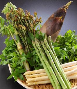 山菜盛り合わせの写真素材 [FYI02057211]