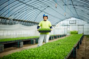 ビニールハウスで働く農婦の写真素材 [FYI02057379]