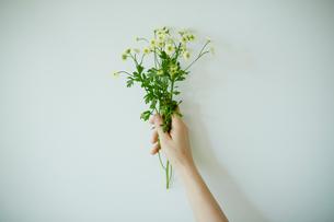 花束を持つ女性の手の写真素材 [FYI02057407]
