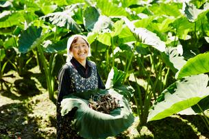 収穫したサトイモを持つ農婦の写真素材 [FYI02057477]