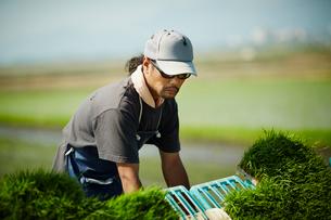 田植え作業をする農夫の写真素材 [FYI02057788]