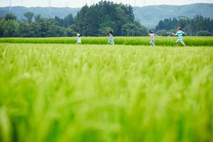 緑の田園で走る子供達の写真素材 [FYI02057806]
