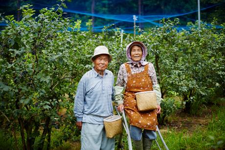 ブルーベリー畑に立つ農家夫婦の写真素材 [FYI02057890]