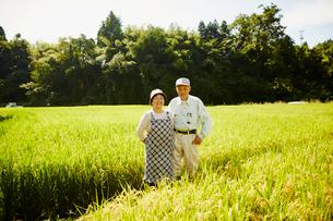 稲田に立つ農家夫婦の写真素材 [FYI02057998]
