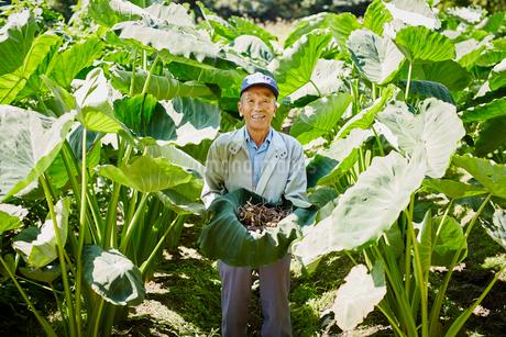 収穫したサトイモを持つ農夫の写真素材 [FYI02058077]