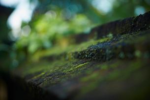 苔の写真素材 [FYI02058183]