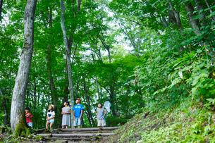 緑の木々を見上げる子供達の写真素材 [FYI02058241]