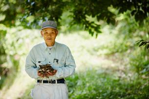 収穫したサトイモを持つ農夫の写真素材 [FYI02058246]