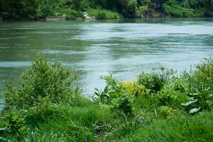 新緑の最上川の写真素材 [FYI02058306]