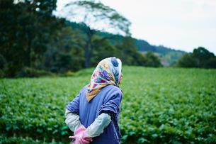 畑を眺める農婦の後ろ姿の写真素材 [FYI02058453]