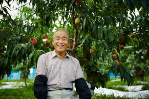 モモ畑の笑顔の農夫の写真素材 [FYI02058458]