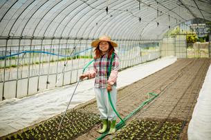 ビニールハウスで苗に水をやる農婦の写真素材 [FYI02058513]
