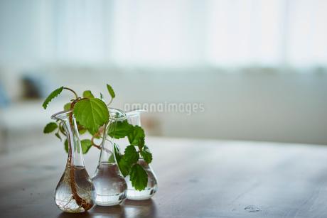 一輪挿しに飾った植物の写真素材 [FYI02058561]