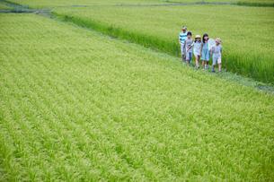 緑の田園とあぜ道を歩く子供達の写真素材 [FYI02058765]