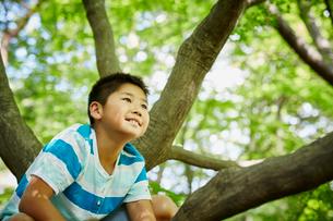 木登りをする男の子の写真素材 [FYI02058794]