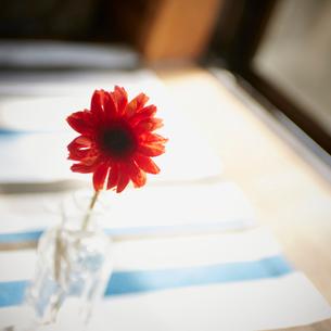 一輪挿しの赤いガーベラの写真素材 [FYI02058817]