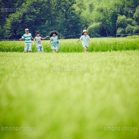 緑の田園で走る子供達の写真素材 [FYI02058868]