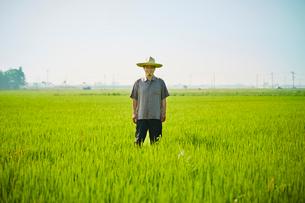 水田に立つ農夫の写真素材 [FYI02058945]