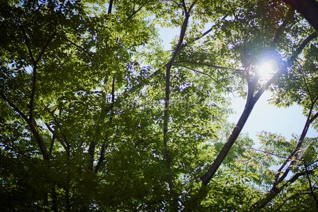 緑の枝葉と木漏れ日の写真素材 [FYI02059048]