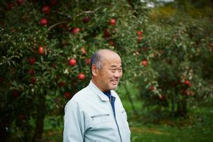 リンゴ畑の農夫の写真素材 [FYI02059055]