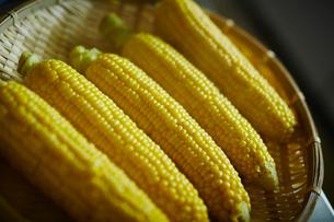 トウモロコシの写真素材 [FYI02059131]