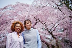 花見をする外国人女性2人の写真素材 [FYI02059156]