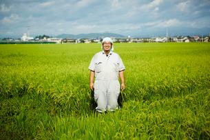稲田に立つ笑顔の農夫の写真素材 [FYI02059188]