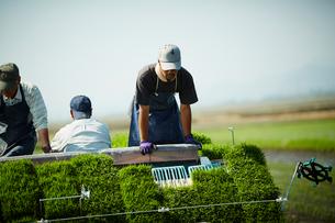 田植え作業をする農夫の写真素材 [FYI02059203]