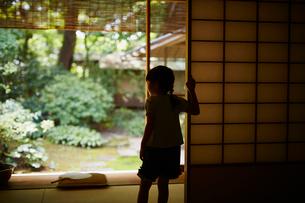 庭を眺める女の子の写真素材 [FYI02059391]