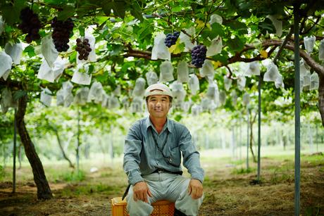 ブドウ畑の農夫の写真素材 [FYI02059595]