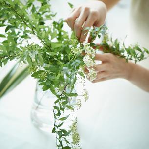 花を活ける女性の写真素材 [FYI02059603]