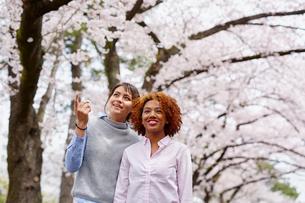 花見をする外国人女性2人の写真素材 [FYI02059646]
