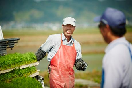 田植えをする笑顔の農夫の写真素材 [FYI02059681]