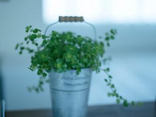 観葉植物の写真素材 [FYI02059686]