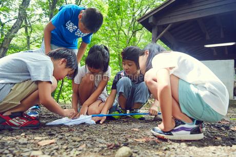 虫取りをする子供達の写真素材 [FYI02059761]
