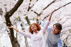 花見をする外国人女性2人の写真素材 [FYI02059879]