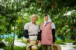 モモ畑に立つ笑顔の農家夫婦の写真素材 [FYI02059998]