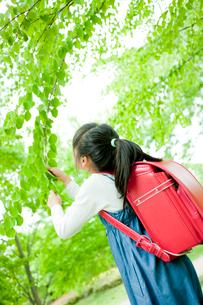 新緑の枝を見る小学生の女の子の写真素材 [FYI02060080]