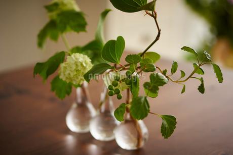 一輪挿しに飾った花の写真素材 [FYI02060087]