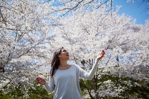 桜を見上げる外国人女性の写真素材 [FYI02060190]