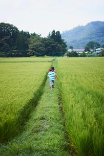 田んぼと子供達の写真素材 [FYI02060218]