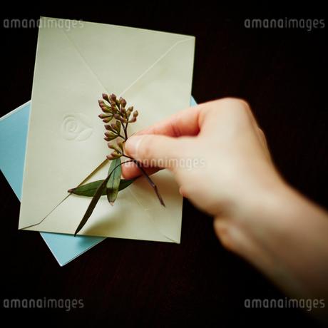 封筒に花を添える女性の手の写真素材 [FYI02060253]