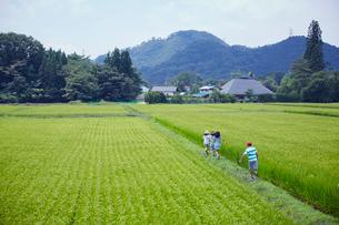 緑の田園と子供達の後ろ姿の写真素材 [FYI02060312]