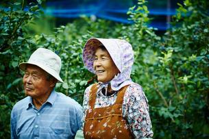 ブルーベリー畑の農家夫婦の写真素材 [FYI02060326]