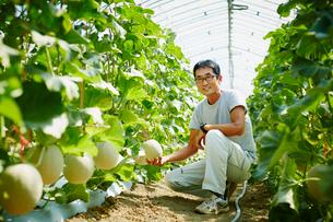 メロン畑の農夫の写真素材 [FYI02060367]