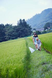 あぜ道で虫取りをする子供達の写真素材 [FYI02060390]